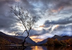 Autumnal sunrise (Ade Ward Phototherapy.) Tags: tree lonetree sky dramatic clouds sunrise mountains lakes nikon autumn scenery landscape phototherapy wales northwales llanberis llynpadarn