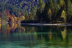Albero Giallo (giannipiras555) Tags: lago riflessi alberi giallo verde green colori autunno tovel trentino natura landscape panorama paesaggio foresta nikon