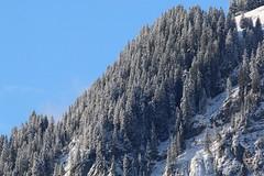 Bäume im Winter (Nice Day) Tags: kandersteg sonnenuntergang winter schnee