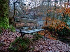 339/365 (Charlie Little) Tags: p365 project365 bench carlisle cumbria panasonic lumixg autumn autumnal