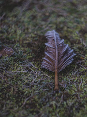 Rimy leaf (Gunterpapaa) Tags: helios44 helios 6d canon vintage vintagelens m42 leaf nature cold rimy
