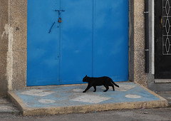 going on . . . (LichtEinfall) Tags: maroc584 katze tanger marokko