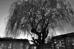 Stralsund, Knieper Vorstadt - Weide (tom-schulz) Tags: ricoh grii monochrom bw sw rawtherapee gimp stralsund thomasschulz weide häuserblock abend