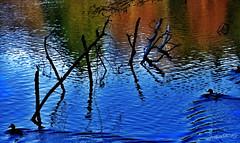 ~~ Les Mille Étangs , les 2 canards~~ (Joélisa) Tags: décembre2019 les1000étangs franchecomté eau reflets branches canards