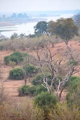 Chobe National Park (peterkelly) Tags: digital canon 6d africa intrepidtravel capetowntovicfalls botswana chobenationalpark choberiver trees tree savanna river