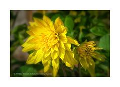 1 Million Views ... (My digital Gallery) Tags: views one million flower yellow