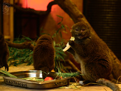 Potat (rafalp94_1994) Tags: cute eating animal little