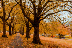 Golden autumn alley in park (wounderful0) Tags: autumn trees fall season gold golden alley park street orange tree nature colors yellow forest way landscape leaf colorful day outdoor path foliage wood november color beautiful leaves october natural bright background september environment