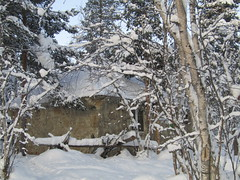 in Saami village (VERUSHKA4) Tags: astoundingimage canon europe russia murmansk nature village saamivillage house snow tree neve winter hiver wall november north nord deepnorth northeneurope cold season window fenetre pinetree branch trunk view vue