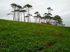 Al mar (Micheo) Tags: ngc reservanaturaldelaplayabarayo asturias bosque forest
