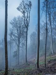 Foggy forest (lightfetcher) Tags: autumn zürich uetliberg branches light mist morning trees wood forest fog