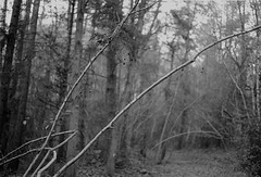 Stanley Burn Woods. Pentax Km 50mm lens, Tmax 400 in Ultrafin (Jonathan Carr) Tags: trees woodland blackandwhite monochrome 35mm analogue tmax400 ultrafin