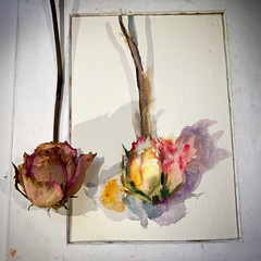 Day 1581.  The daily rose painting for today.   #art #バラ #rose #flower #水彩画 #stilllife #process #artclass #painting #sketching #watercolour  #dailyproject #watercolorclass #watercolourakolamble (akolamble) Tags: art バラ rose flower 水彩画 stilllife process artclass painting sketching watercolour dailyproject watercolorclass watercolourakolamble