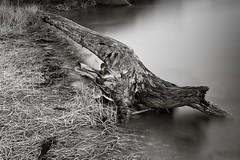 Tree trunk at the water (Geir Bakken) Tags: olympus olympusomdem5mark2 mitakon25mmf095 microfourthirds m43 mirrorless speedmaster blackandwhite trunk water longexposure perfectbeauty