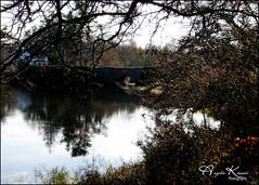 Natures Frame... (angelakanner) Tags: canon70d tamron18400 frankmelvillepark longisland water reflection trees bridge autumn
