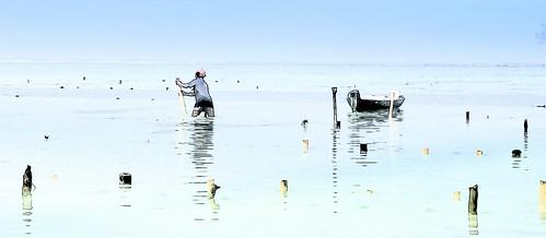culture des algues (Lembongan - Indonésie)