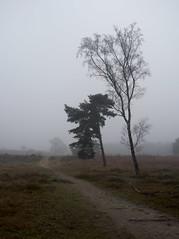 Dorst - Boswachterij Dorst (Grotevriendelijkereus) Tags: dorst noord brabant oosterhout netherlands nederland heath heather heathlands forest wood moor bos heide fog mist mistig nevel grey winter tree bomen landschap landscape