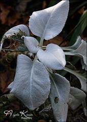 Interesting Plant... (angelakanner) Tags: canon70d tamron18400 longhousereserve longisland