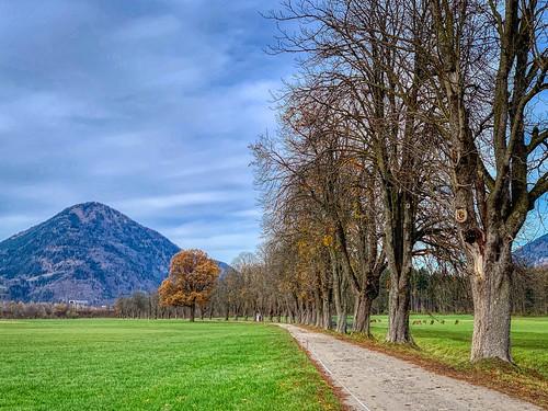 Tree-lined path in autumn near Ebbs, Tyrol, Austria