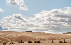 golden hills (elena rw) Tags: a7riii a7r3 sony summicronr90mm summicronr summicronr90mmf2 countryside idyllic dramaticclouds cloud cloudy clouds field hill hills rollinghills yellow golden blue leica vintagelens