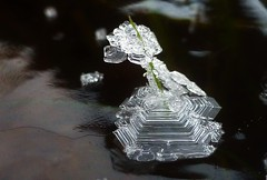 Nature's Little Ice Sculpture..x (Lisa@Lethen) Tags: macro ice winter cold freezing frozen froze puddle grass blade