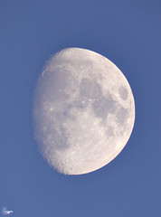 Moon over Massachusetts 81.8% Waxing Gibbous 248,499 miles from the back yard... (J.Baker Photographies) Tags: telescope space moon massachusetts refractor lunar luna day sky