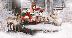 Xmas friends (meriluu17) Tags: lepoppycock hextrordinary santainc apple squirrel animal reindeer reindeers rudolph winter cold freeze frozenm snow snowy snowing forest cute animals pet