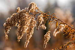 5DMkIV-2019-0028 (Mark*f) Tags: autumn fall architcturaldetail architecture balcony bench brown concrete construction euonymous garden grass green jogger kale leaf macro mother oak pepper purple red restoration seedhead sky stone stroller sumac trees vines withered yellow