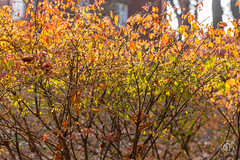 5DMkIV-2019-0026 (Mark*f) Tags: autumn fall architcturaldetail architecture balcony bench brown concrete construction euonymous garden grass green jogger kale leaf macro mother oak pepper purple red restoration seedhead sky stone stroller sumac trees vines withered yellow