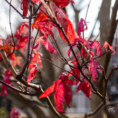 5DMkIV-2019-0019 (Mark*f) Tags: autumn fall architcturaldetail architecture balcony bench brown concrete construction euonymous garden grass green jogger kale leaf macro mother oak pepper purple red restoration seedhead sky stone stroller sumac trees vines withered yellow