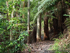 Forest path ahead ferns trees (Julie V. Simpson Photographer) Tags: green trees leaves nature shadows naturalworld instadaily instagram instanature naturephotography naturelovers natureza natureperfection newzealand ferns forest nzbush