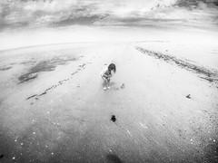(seanlewis) Tags: puertopeñasco mexico rachel toddler beach sand water bajacaliforniasur blackandwhite bw clouds sky
