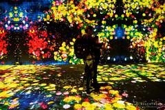 20191129-53-TeamLAB Borderless exhibition (Roger T Wong) Tags: 2019 asia japan rogertwong sel24105g sony24105 sonya7iii sonyalpha7iii sonyfe24105mmf4goss sonyilce7m3 teamlab teamlabborderlelss tokyo art digitalart graphics lights museum travel