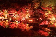 八芳園 Tokyo Red Garden Happo-en Tokyo Red Garden (ELCAN KE-7A) Tags: 日本 japan 東京 tokyo 港区 minato 白金台 shirokanedai 八芳園 happoen red night 庭園 garden 紅葉 ペンタックス pentax k3ⅱ 2017