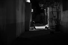 ACA_451 (Andy C. Arciga) Tags: streetlife streetphotography streetscene streetshots eveningstreetshoots eveningphotos lowlight isonoise nikonz6 nikonmirrorless dubai horalanz passion