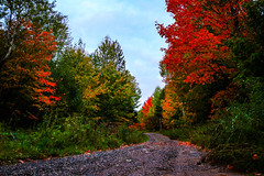The Backwoods (BravoDelta1999) Tags: peak fall autumn color marquette county michigan rollingmill road