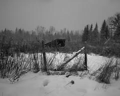 Forgotten Snows 2 (http://www.aimonephoto.com) Tags: 4x5 blackwhite kodaktrix320 largeformat newhampshire pyrocatmc travelwide904x5filmcamera film monochrome safe