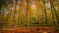 Farben im Wald (KaAuenwasser) Tags: sattefarben farben farbe kräftig leuchtend bunt wald herbst herbstlich natur licht schatten jahreszeit pflanzen baum bäume laubbäume nadelbäume