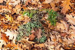 5DMkIV-2019-0034 (Mark*f) Tags: autumn fall architcturaldetail architecture balcony bench brown concrete construction euonymous garden grass green jogger kale leaf macro mother oak pepper purple red restoration seedhead sky stone stroller sumac trees vines withered yellow