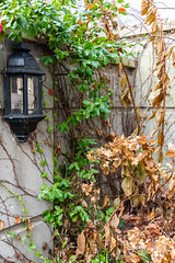 5DMkIV-2019-0009 (Mark*f) Tags: autumn fall architcturaldetail architecture balcony bench brown concrete construction euonymous garden grass green jogger kale leaf macro mother oak pepper purple red restoration seedhead sky stone stroller sumac trees vines withered yellow