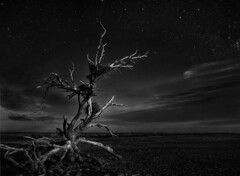 The End of Everything (Greg Adams Photography) Tags: saltonsea california desert night tree nest storknest sky stars clouds travel hhsc2000 composite monochrome bw blackandwhite noir roots branches dark