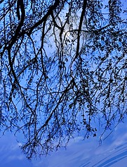 LONE BIRD (golfbag3) Tags: silhouette photomanipulation branches tree bird