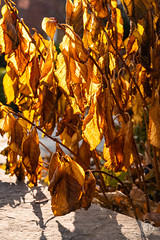 5DMkIV-2019-0017 (Mark*f) Tags: autumn fall architcturaldetail architecture balcony bench brown concrete construction euonymous garden grass green jogger kale leaf macro mother oak pepper purple red restoration seedhead sky stone stroller sumac trees vines withered yellow