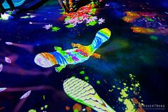 20191129-42-TeamLAB Borderless exhibition (Roger T Wong) Tags: 2019 asia japan rogertwong sel24105g sony24105 sonya7iii sonyalpha7iii sonyfe24105mmf4goss sonyilce7m3 teamlab teamlabborderlelss tokyo art digitalart graphics lights museum travel