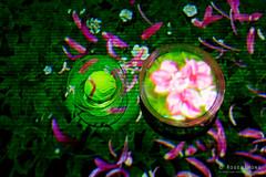 20191129-47-TeamLAB Borderless exhibition (Roger T Wong) Tags: 2019 asia japan rogertwong sel24105g sony24105 sonya7iii sonyalpha7iii sonyfe24105mmf4goss sonyilce7m3 teamlab teamlabborderlelss tokyo art digitalart graphics lights museum travel