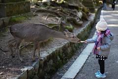 あをによし (dolcejp0310) Tags: 日本 japan 奈良 nara 神鹿 sony a7iii