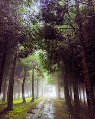 through the woods (ekelly80) Tags: azores portugal sãomiguel october2019 furnas hike foggy fog woods forest green throughthewoods treelined light shadows bright trail path view