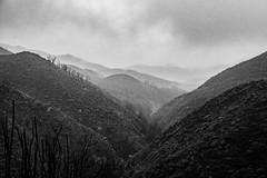 POTD 341-2019 (Webtraverser) Tags: 365picturesin2019 atmospheric backbonetrail d7500 everydayphotographer foggy moody mountaintrail nikon pad2019341 pictureoftheday potd2019 project365 santamonicamountains valleydview malibu california unitedstatesofamerica