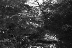 pond (Typ250) Tags: 東京都 日本 leicam leica leicammonochrom monochrome mmonochrom summarex summarex85cm summarex85mm summarexf85cm115