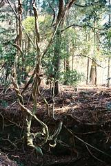 (Kkeina) Tags: film analog manual 35mm 50mm olympus om1 japan nara nature forest park trees